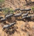 This image shows elephants from the air.