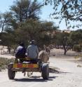 Men traveling by donkey cart through the ≠Khomani San community in the southern Kalahari Desert, South Africa.