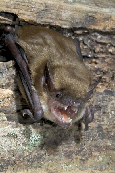 Researchers Unlocking The Secrets Of Cross Species Rabies