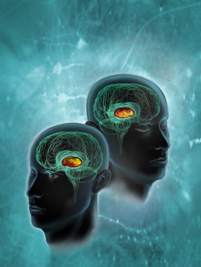 Researchers identify a brain 'switchboard' important in attention and sleep