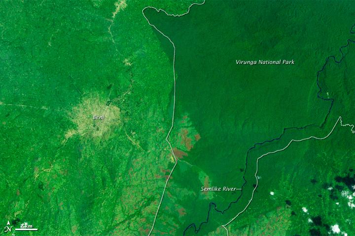 Felling of tropical trees has soared, satellite shows, not slowed as UN study found