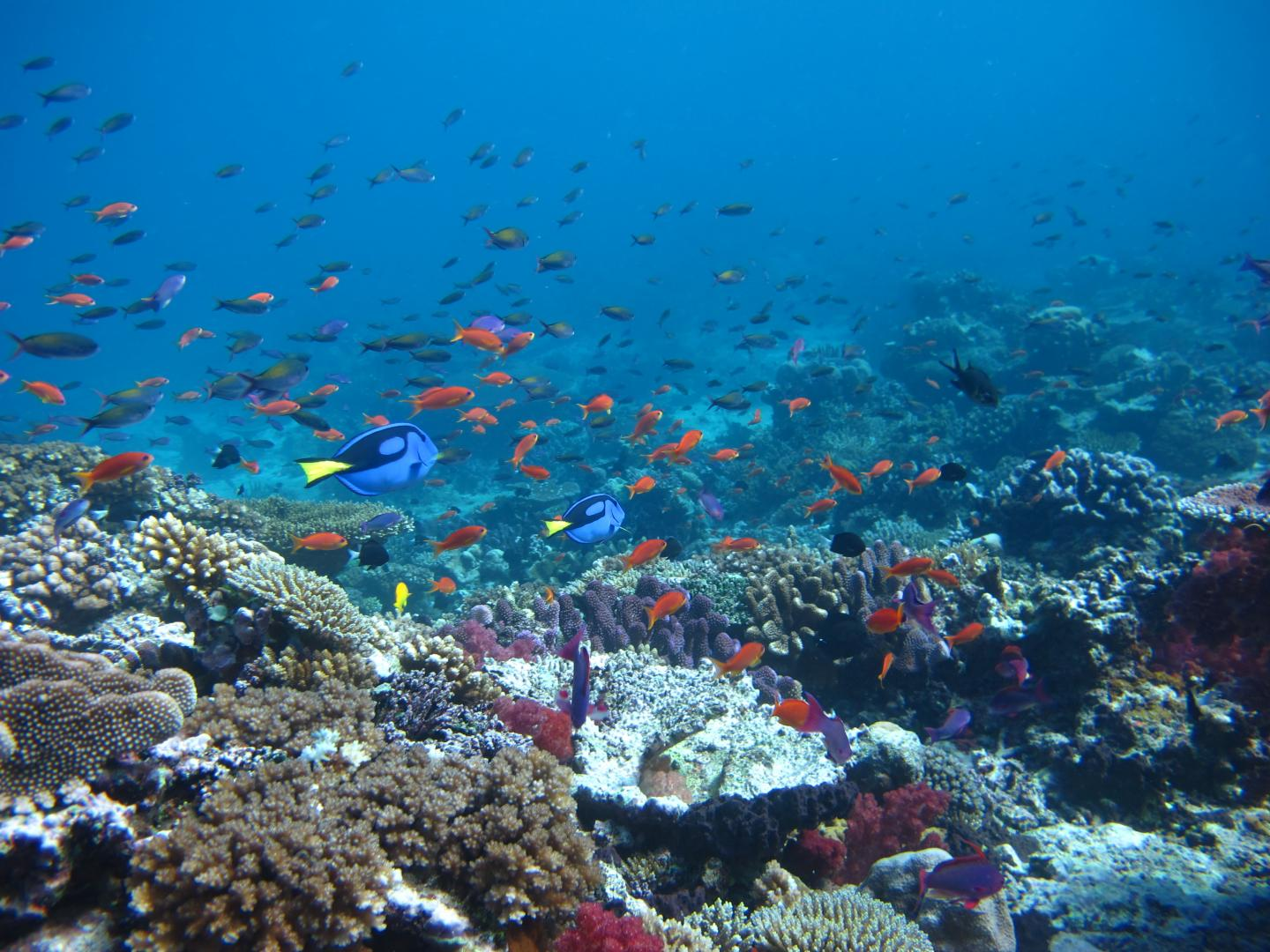 Fishing impacts on the great barrier reef e science news for Great barrier reef fish