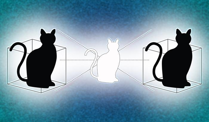 The chemistry between science and love- Schrodinger's Cat