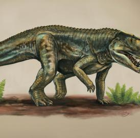 This is an artist's rendering of a <em>Vivaron haydeni</em> that lived more than 200 million years.