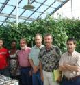 Pictured left to right are UC Riverside cowpea researchers Wellington Muchero, Ndeye Diop, Raymond Fenton, Jeff Ehlers, Philip Roberts and Timothy Close in a greenhouse on the UCR campus. Cowpea plants stand behind them.