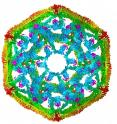 This is a model of the structure of clathrin, a protein that researchers at The University of Texas Health Science Center at San Antonio used to study how a heat shock protein disassembles protein complexes.
